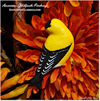Hand painted American Goldfinch Perching with autumn flowers.