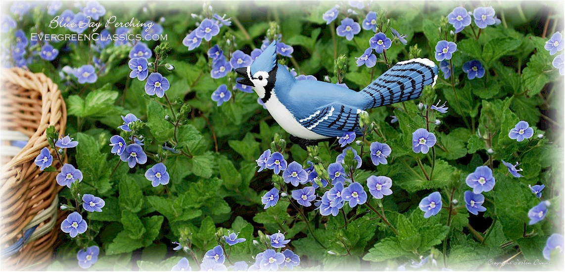 Blue Jay perching amongst blue and white Veronica flowers near a basket.