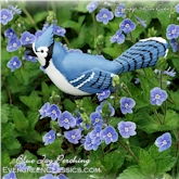 Blue Jay perching in the blue and white Veronica flowers.