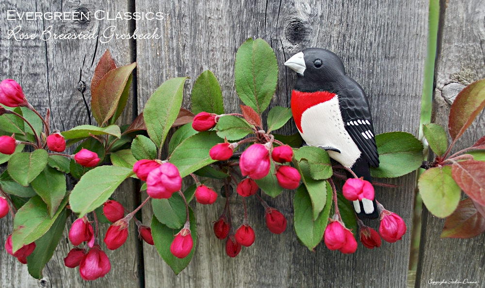 Rose-Breasted Grosbeak Christmas decoration on a crabapple branch in bloom.