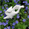Trumpeter Swan Landing shown over a bed of Veronica.